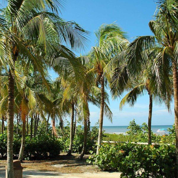 Must do tijdens een rondreis door de VS: eilandhoppen op de Florida Keys