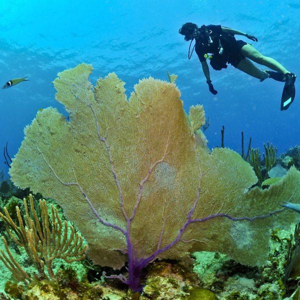 Biorocks op de Gili eilanden