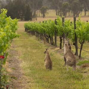 Lokale drankjes in Port Macquarie