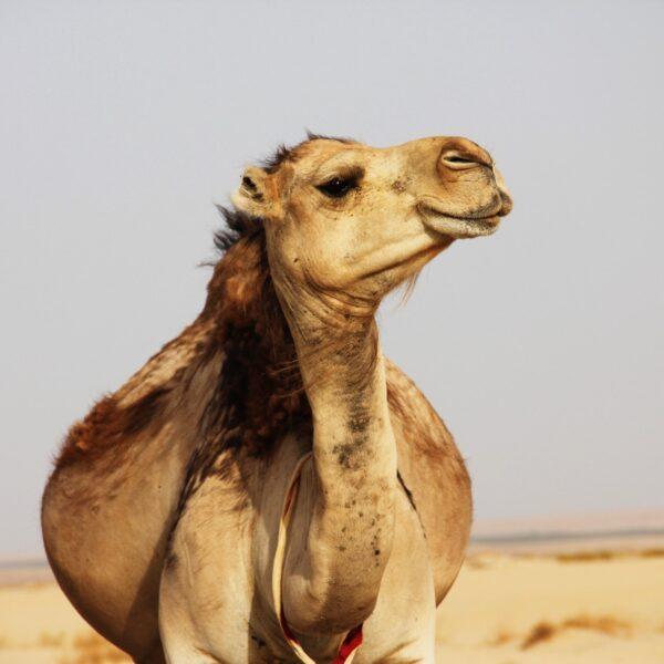 5 x hoogtepunten in Tunesië