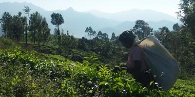Hoogtepunten in Sri Lanka: wat je er écht niet mag missen