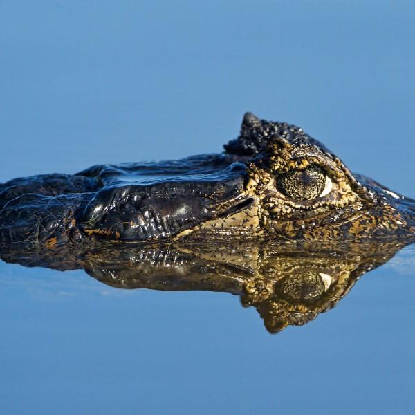 De Pantanal: onvervalste momenten in de wildernis