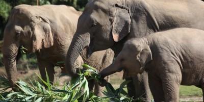 Vrijwilligerswerk bij het Thaise Elephant Nature Park