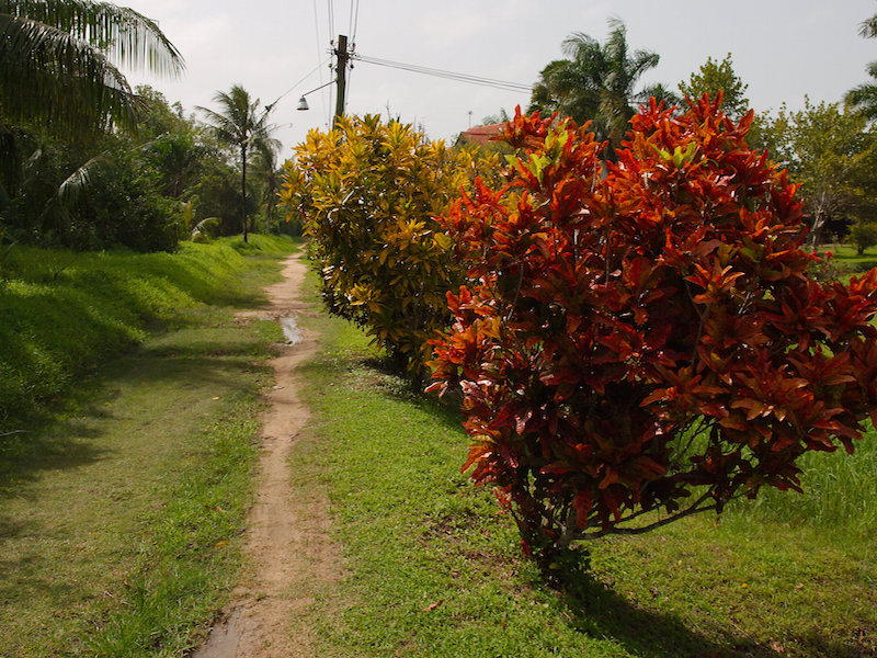 geschiedenis van Suriname