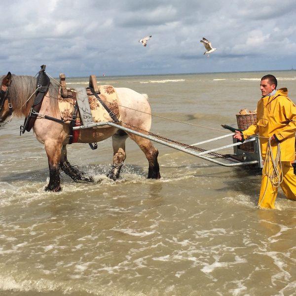 Een weekendje Oostende: aan zee met al je zintuigen