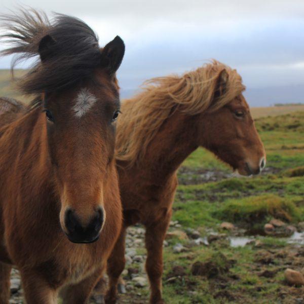 's Werelds meest fotogenieke land in vuur en vlam: Waarom IJsland in de herfst een goed idee is