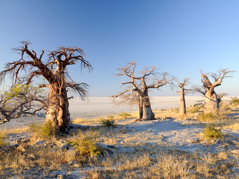 highlights in Botswana