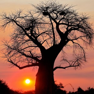 highlights in Botswana