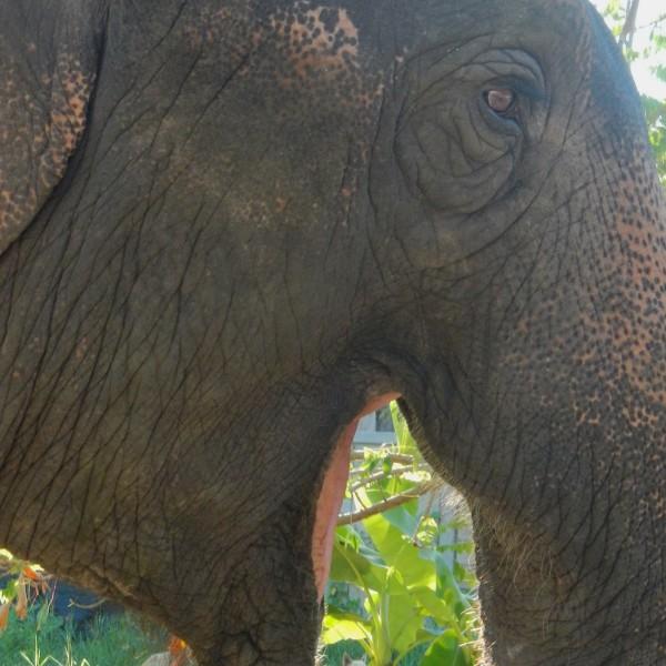 Vrijwilligerswerk bij Thom's Elephant Camp in Pai