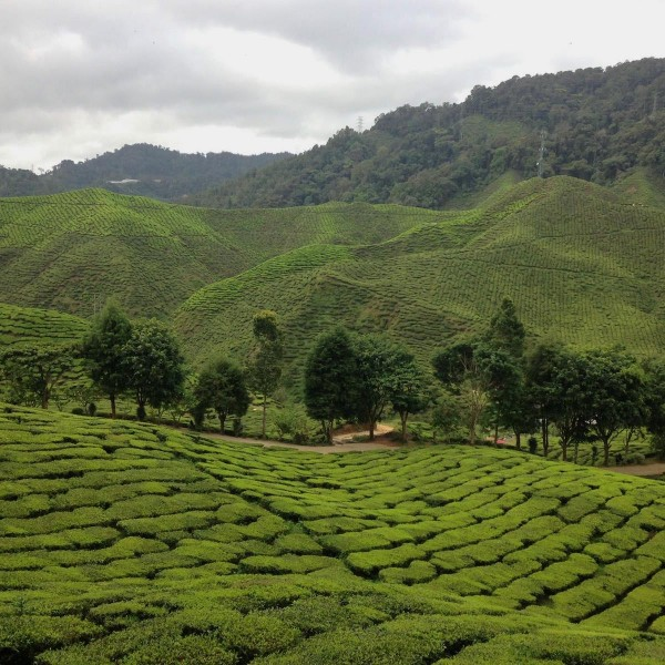 Backpacken in Maleisië: een route van 3 weken