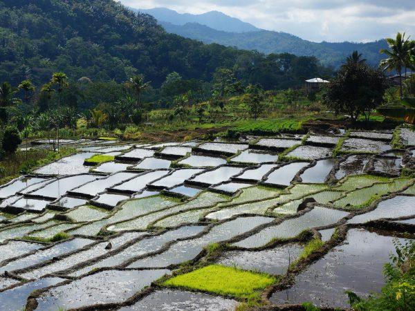 duurzaam reizen in Indonesië