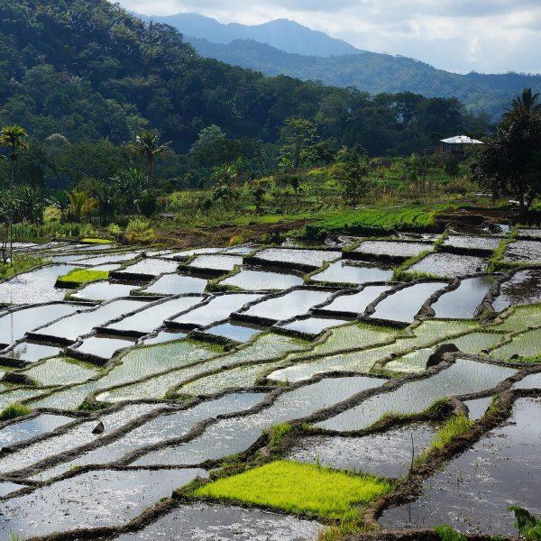 Vijf tips voor duurzaam reizen in Indonesië