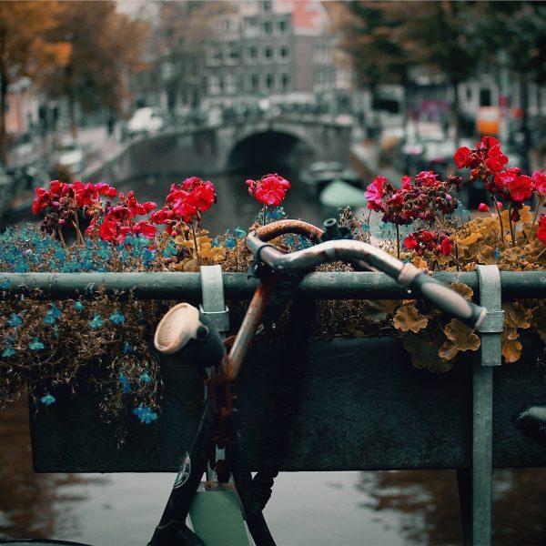 Van stad naar natuur: de mooiste fietsroutes vanuit Amsterdam