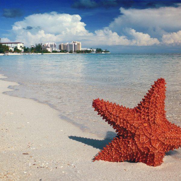 De ultieme droomreis: Cruisen in het Caribisch gebied