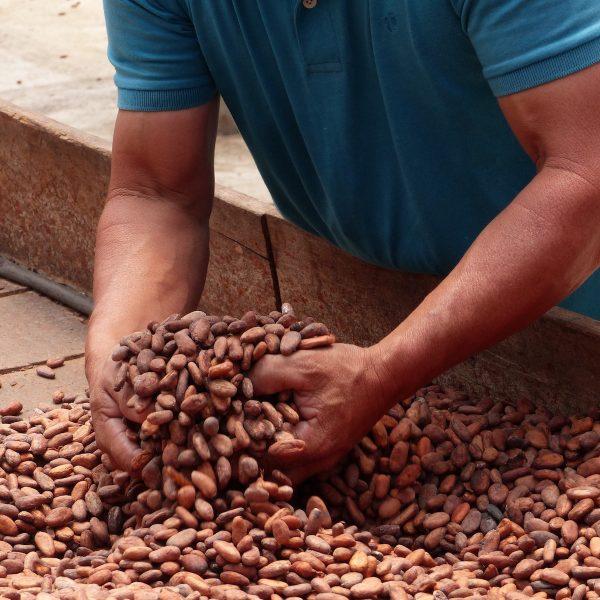 Een reis langs de cacaoproductie in het ongerepte noorden van Nicaragua