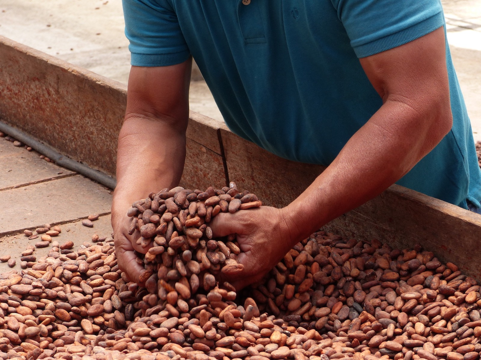 cacaoproductie in Nicaragua
