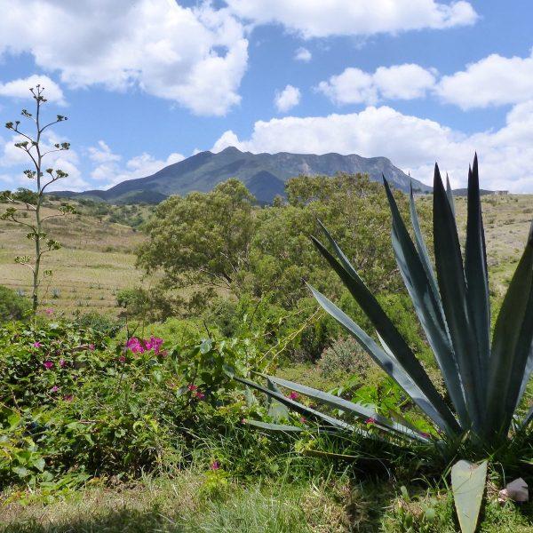 Cultureel Oaxaca: een van de mooiste regio's van Mexico