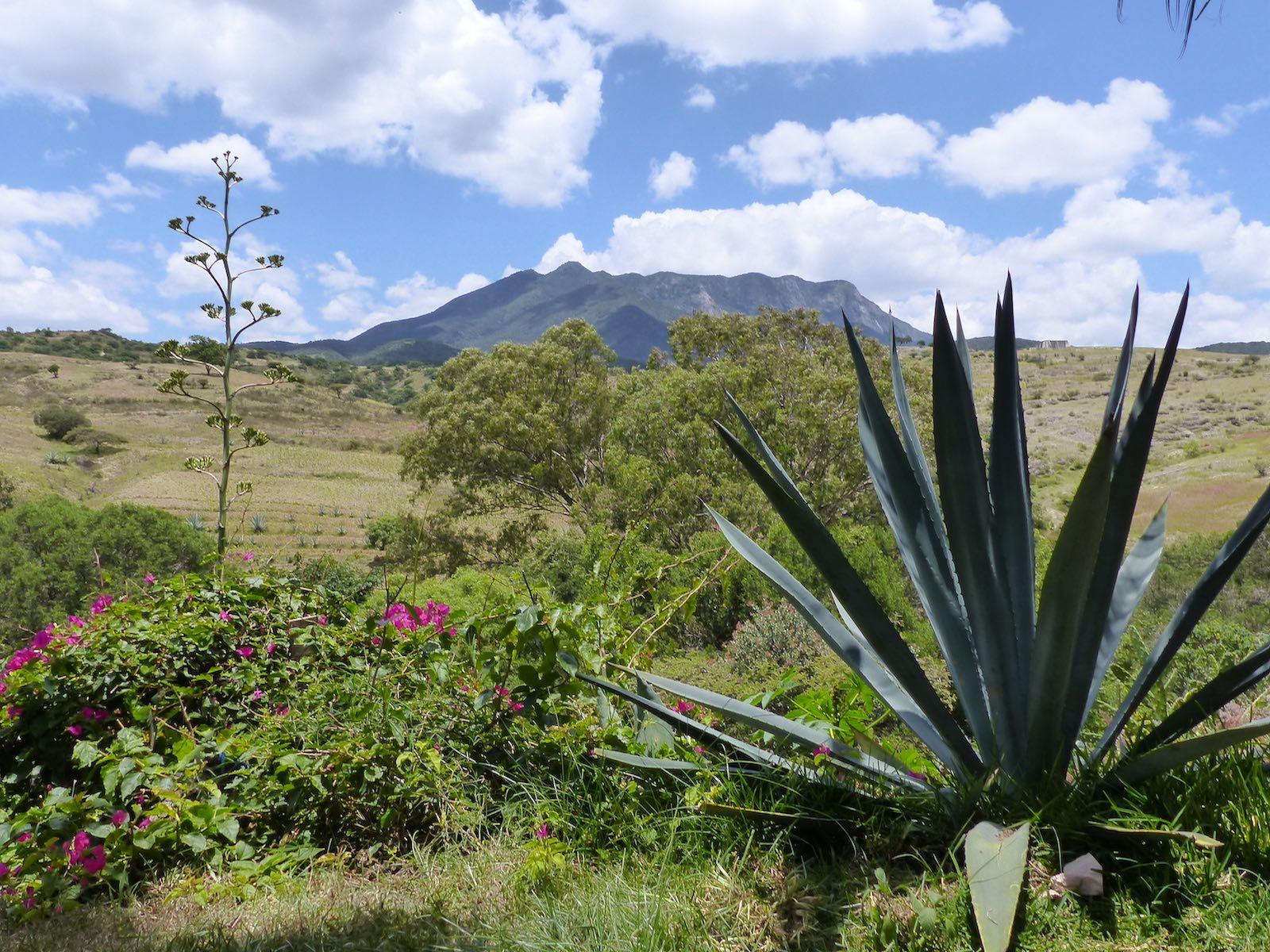 doen in Oaxaca