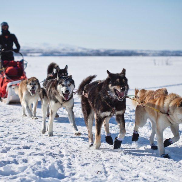 Op vakantie naar de Noorse sneeuw: het beste van de Scandinavische bergen in Hemsedal