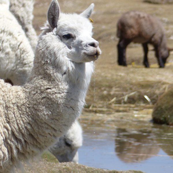 Een reisroute door Peru: in 3 weken het mooiste van het zuiden