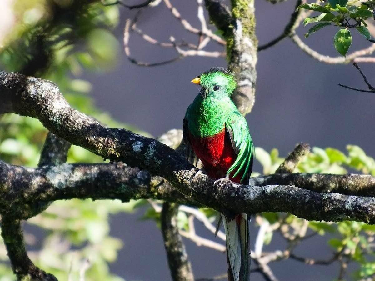 activiteiten in Monteverde