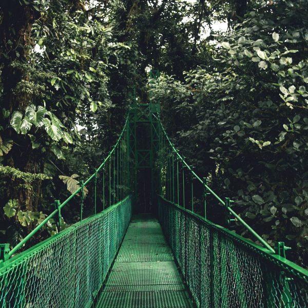 Costa Rica | Op ontdekking in het cloud forest van Monteverde