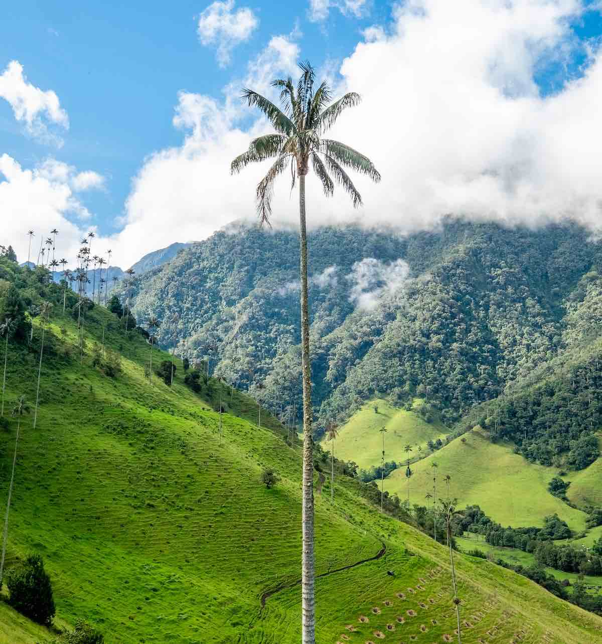 hoogtepunten in Colombia