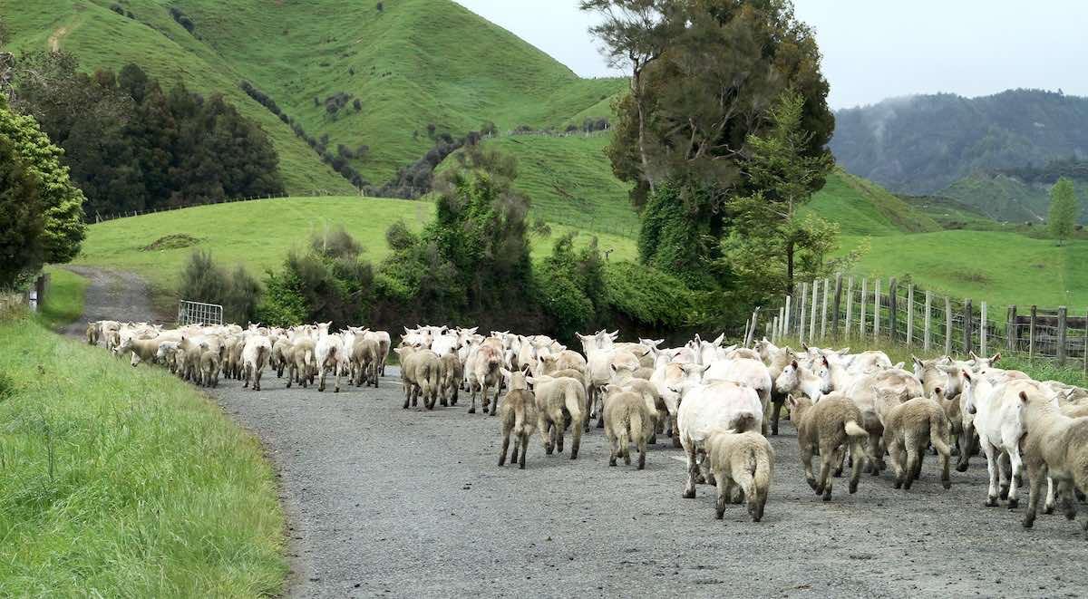 accomodaties in Nieuw-Zeeland