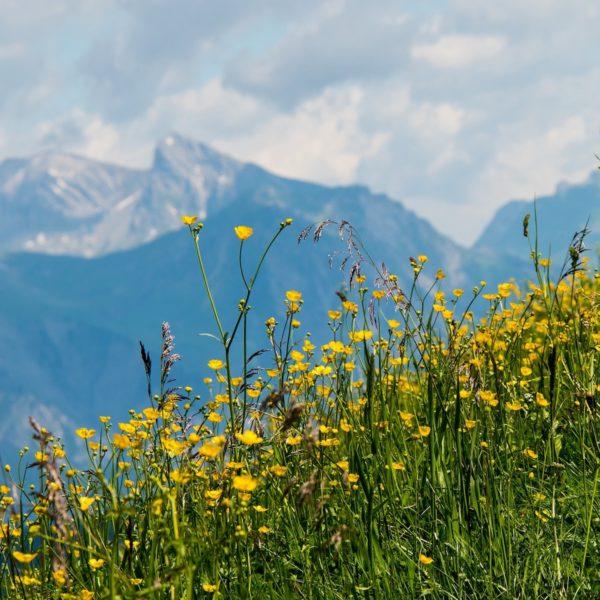 Oostenrijk met al je zintuigen tijdens een zomerse vakantie in Vorarlberg