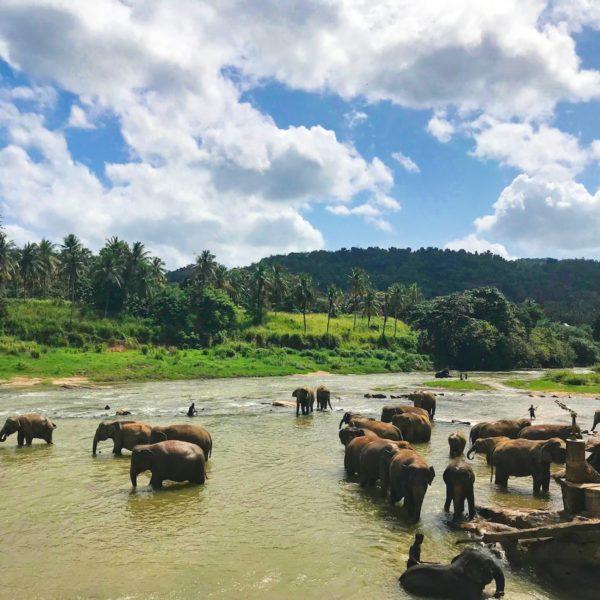Op safari in Sri Lanka: de beste plekken om wildlife te spotten