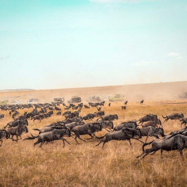 Safari & strand: de hoogtepunten tijdens een rondreis Kenia