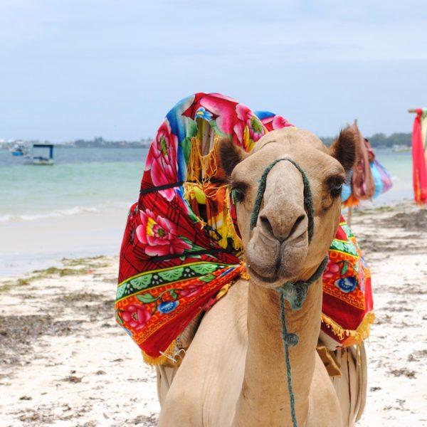 Even bijkomen na je safari? Dit zijn de mooiste stranden in Kenia!