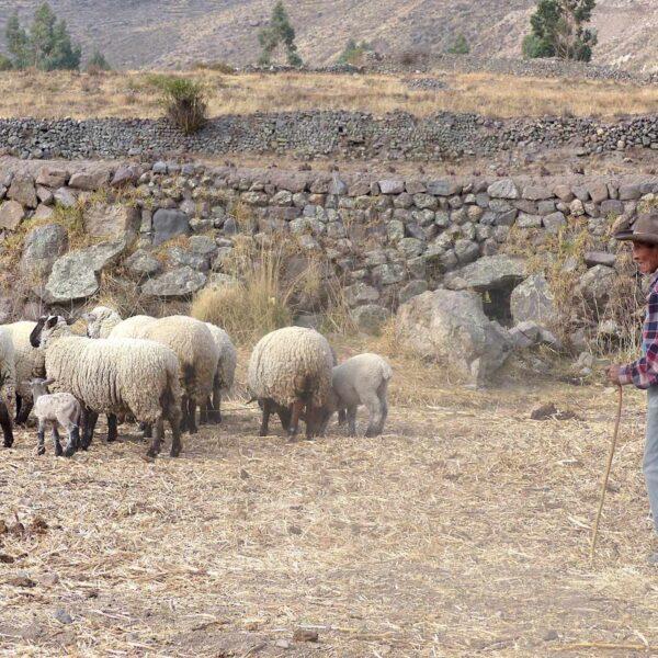 Mijn mooiste reiservaring: reizen met een positieve impact in de Colca Canyon van Peru