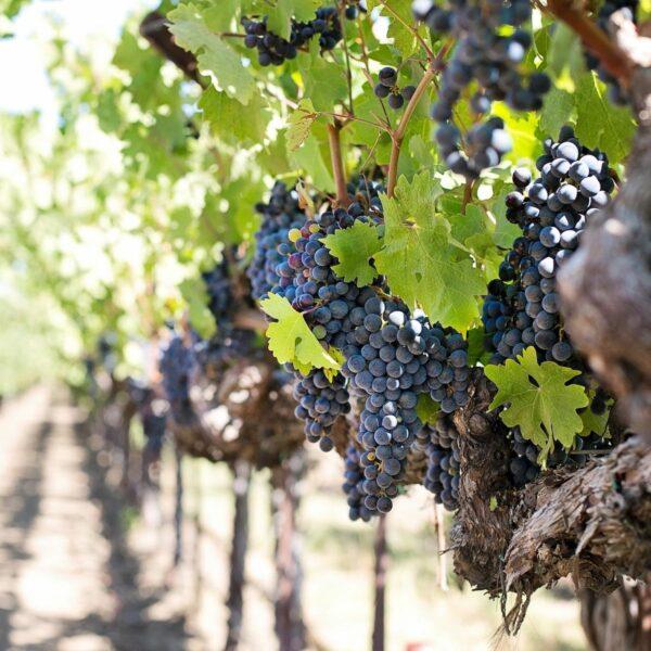 Roadtrippen door de mooiste wijngebieden in Spanje
