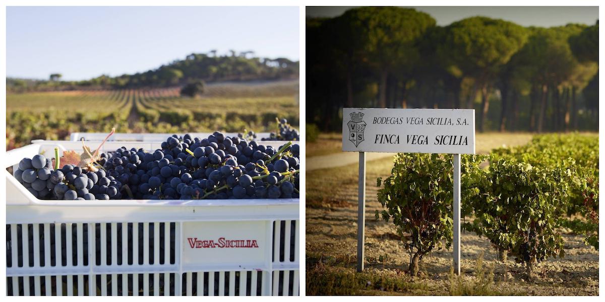 wijngebieden in Spanje