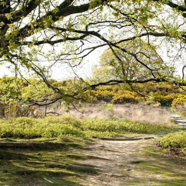 Het mooiste van Nederland in één regio: tips voor een afwisselend weekendje Veluwe