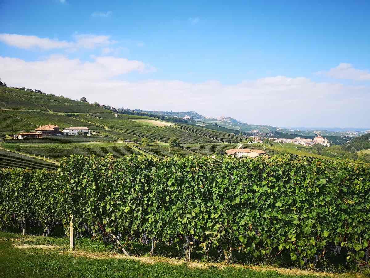wijnlanden in Europa
