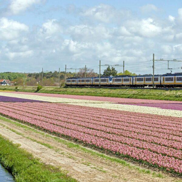 Sightseeing per trein: Dit zijn de mooiste treinroutes in Nederland