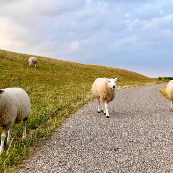 Roadtrippen in Nederland: 145 kilometer genieten over de Gronings Goed Route