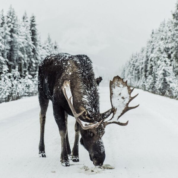 Vakantie vieren tijdens de winter in Canada: City & Ski in Edmonton en Jasper National Park