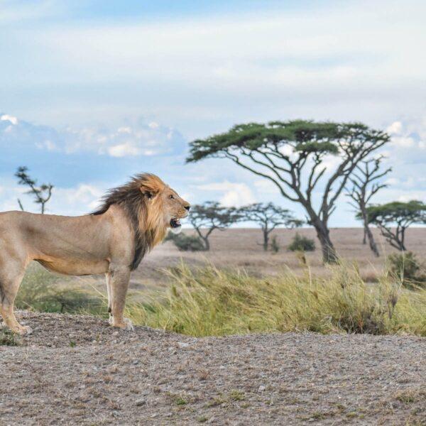 Alles wat je wil weten over een safari in Tanzania