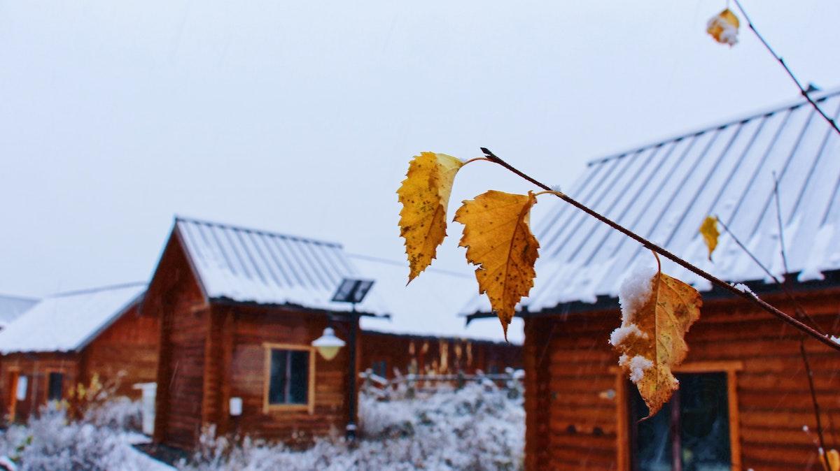 Veluwe in de winter