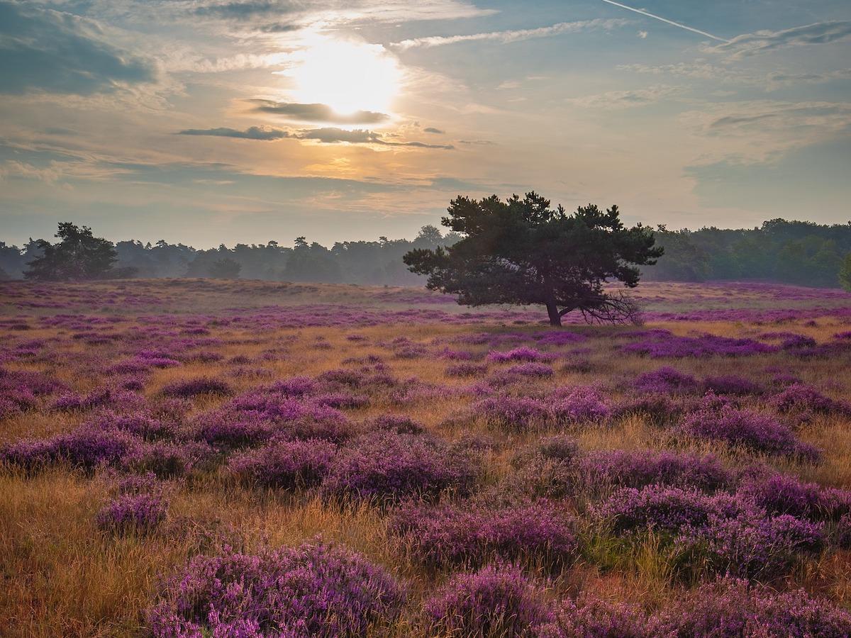 nationale parken in Drenthe