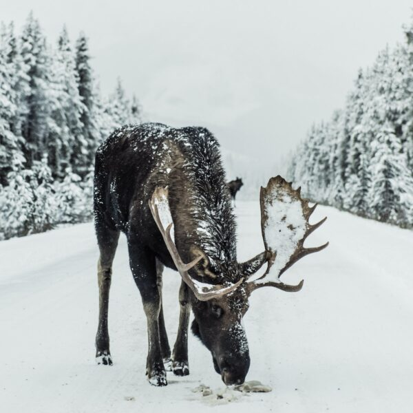 De mooiste bezienswaardigheden tijdens een vakantie in Fins Lapland